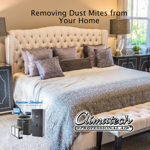 Removing Dust Mites From Your Florida Home